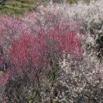 「長崎不登校」訪問支援の初回面談へ